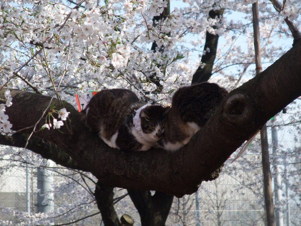 Ueno Park · Cat ©まめぶろ