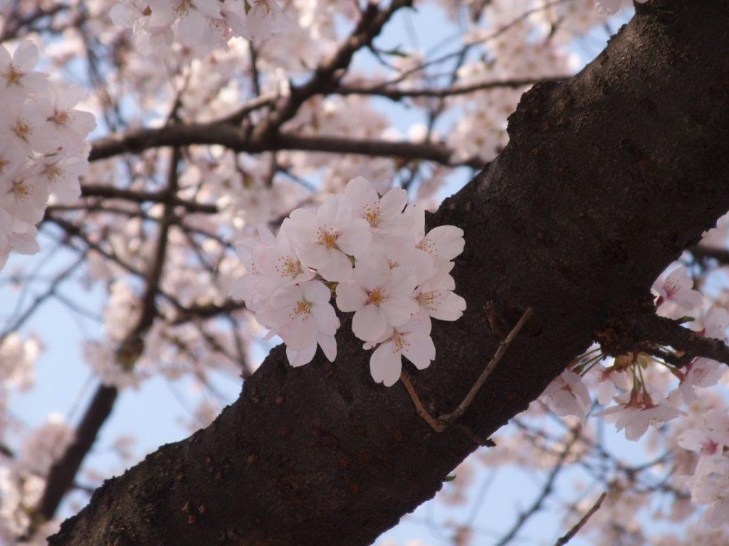 InsiUeno Park · Gardende the park ©まめぶろ