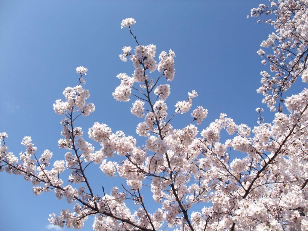 Ueno Park · Garden3 ©まめぶろ