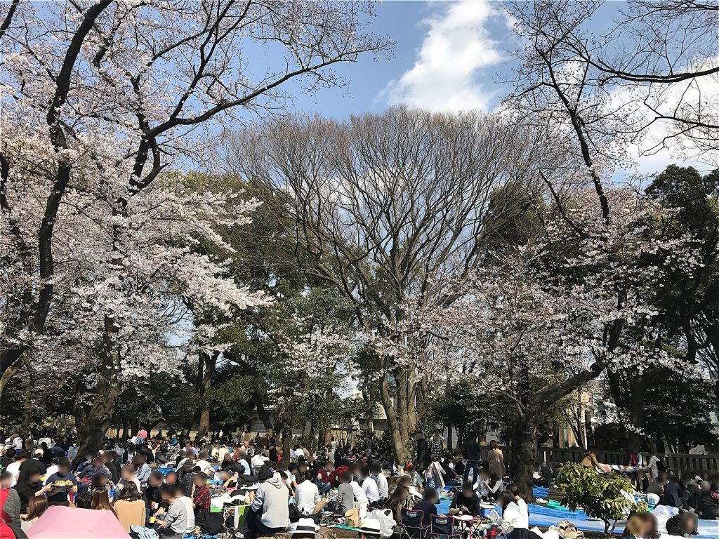 Ueno Park · Cherry blossom viewing ©まめぶろ