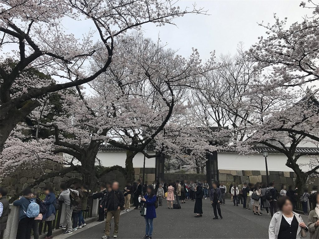 Chidorigafuchi · Cherry blossoms in front of the castle gate ©まめぶろ