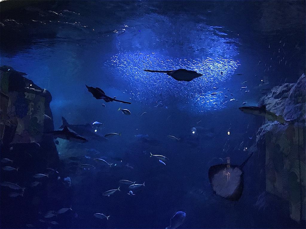 新江ノ島水族館 ©まめぶろ