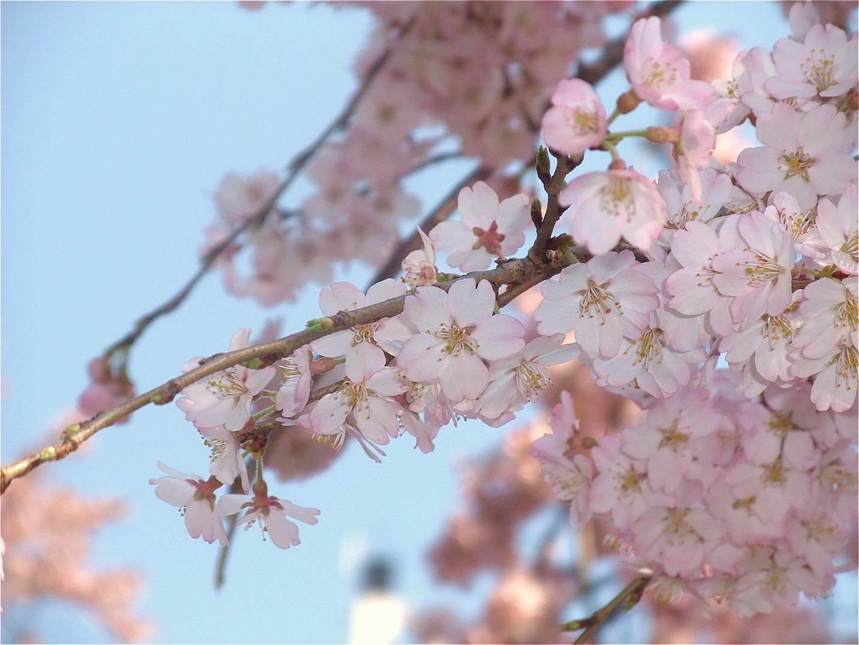 Ueno Park · Garden4 ©まめぶろ